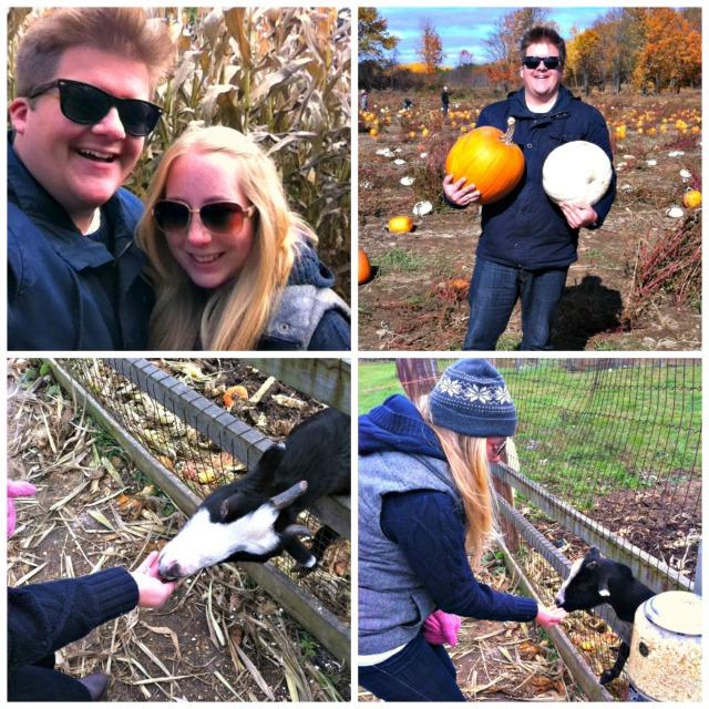 pumpkin patch collage 1