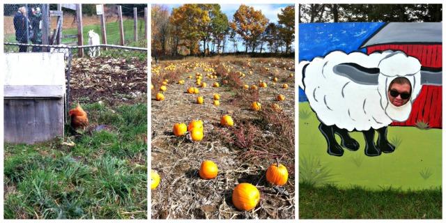 pumpkin patch collage 2